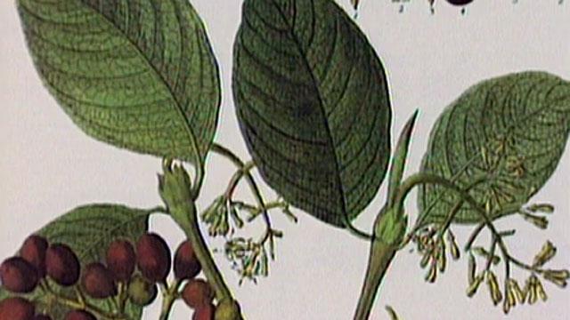 Permacultura cantabria detalle la aventura de aprender for Amigos del jardin botanico